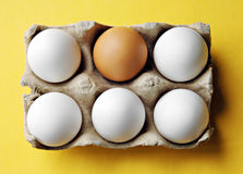 Eggs in an Open Carton Five White One Brown Stock Photo
