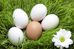 Eggs organic Stock Photo
