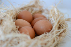 Eggs. Over nest on white background Stock Photography