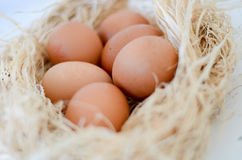 Eggs. Over nest on white background Royalty Free Stock Photography