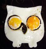 Eggs owl Stock Image
