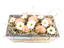 Eggs and oxeye daisy flower in flowerpot Royalty Free Stock Photo