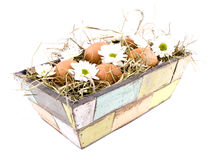 Eggs and oxeye daisy flower in flowerpot Royalty Free Stock Photos
