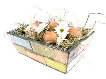 Eggs and oxeye daisy flower in flowerpot Royalty Free Stock Image