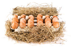 Eggs in pack Stock Photo