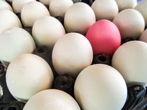 Eggs on pack Stock Photography