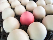 Eggs on pack Stock Image