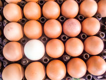 Eggs on pack Stock Images