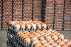 Eggs in the package Stock Photos