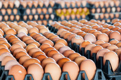 Eggs in the package Stock Image