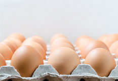 Eggs in the package stock photo