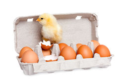 Eggs in the package with cute baby chick Royalty Free Stock Photos