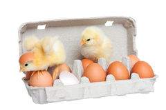 Eggs in the package with cute chick in move. Isolated Royalty Free Stock Photos