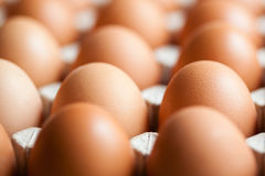 Eggs in packaging. Tray of eggs in a carton packaging Royalty Free Stock Photos