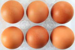Eggs packed Royalty Free Stock Photo