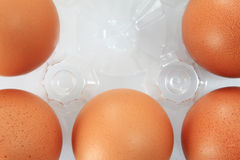 Eggs packed Stock Images