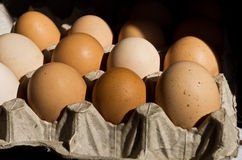Eggs packed for transportation Stock Images