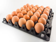 Eggs in panel Stock Photography