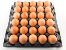 Eggs in panel. On white stock photography