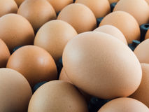 Eggs in panel. Egg in panel, close-up stock image