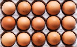 Eggs in panel Royalty Free Stock Image