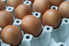 Eggs in panel Stock Image
