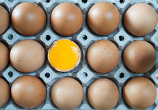 Eggs in panel Royalty Free Stock Photography