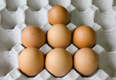 Eggs in panel Royalty Free Stock Photo