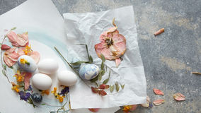 Eggs on a paper stock photos