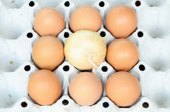 Eggs on paper package Royalty Free Stock Images