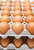 Eggs in paper tray Stock Photography