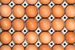 Eggs in the paper tray Stock Photography
