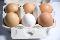 Eggs. A photo of some eggs royalty free stock images