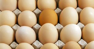 The eggs Royalty Free Stock Images