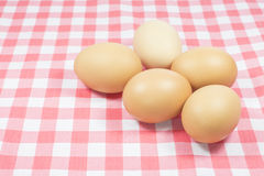 Eggs on pink color plaid Stock Images