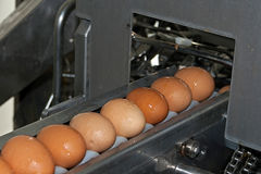 Eggs placed on the transmission line Royalty Free Stock Photo