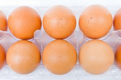Eggs in a plastic carton Royalty Free Stock Photo