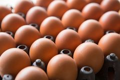 Eggs in a plastic panel. With a beautiful light and shadow royalty free stock photography