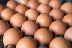 Eggs in a plastic panel. With a beautiful light and shadow stock images