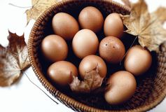 eggs plate leaf braun color table white background close-up food royalty free stock photos