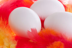 Eggs on plumage Royalty Free Stock Photo