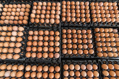 Eggs preserved in panel wholesale market Royalty Free Stock Photos