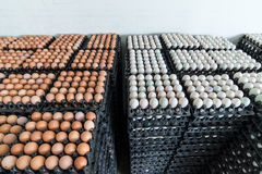 Eggs preserved in panel wholesale market Stock Photos
