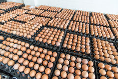 Eggs preserved in panel wholesale market Royalty Free Stock Image