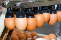 Eggs production line Royalty Free Stock Image