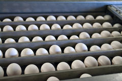 Eggs in a production line packing. Eggs in a modern production line during sorting and packing Stock Photos