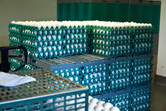 Eggs in a production line packing. Eggs in a modern production line during sorting and packing Royalty Free Stock Photos