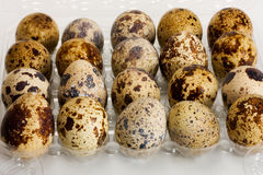 Eggs quail Royalty Free Stock Photos