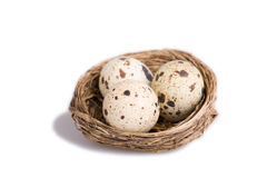 Eggs quail Stock Image
