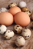 Eggs. Quail and chicken eggs on a wooden table stock photography